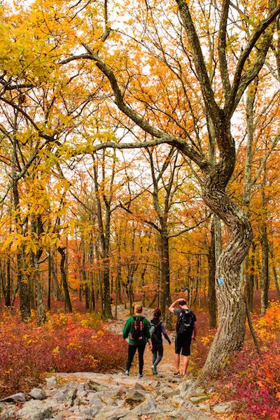 fall_tree